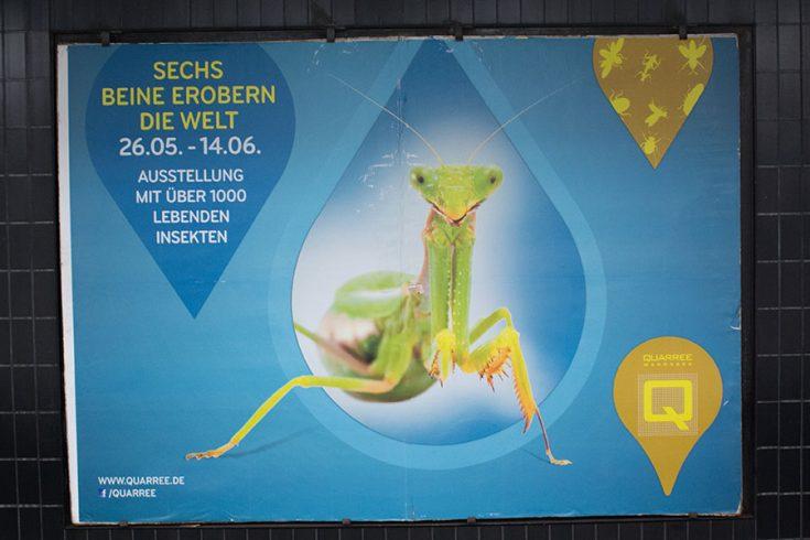 Titelbild Insekten