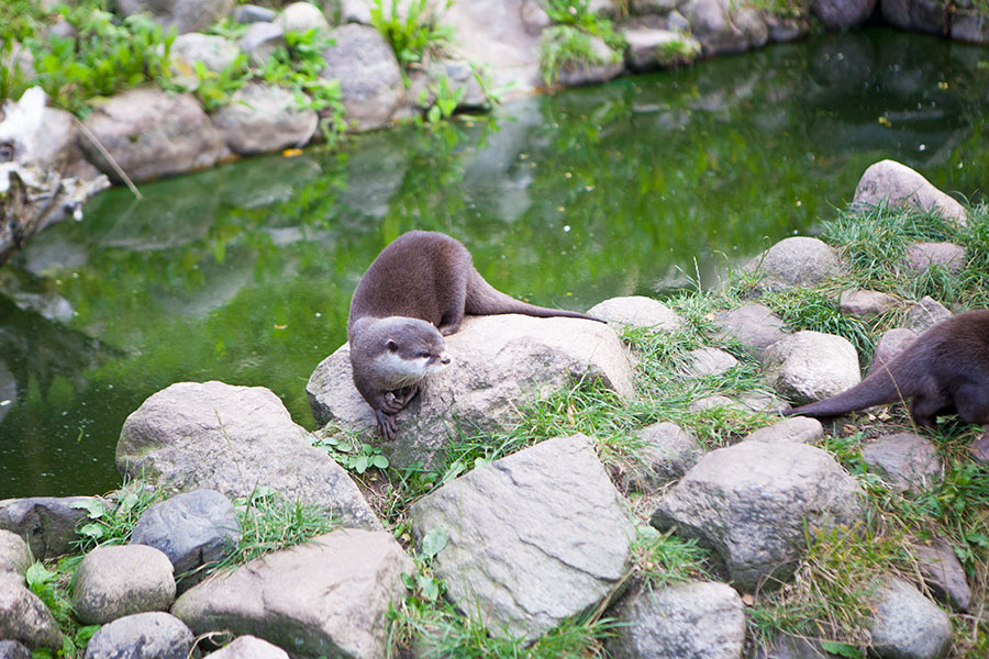 Otterweibchen Liese - Videoreportage