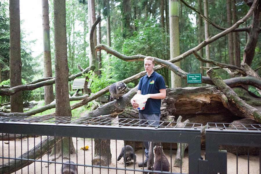 Fütterung der Waschbären - Videoreportage